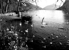 Möte av fåglar på sjön Arkivfoto