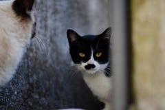 Möte av katter Royaltyfria Foton