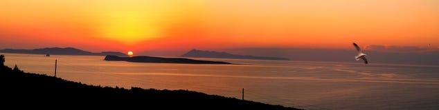 Möve auf dem Sonnenuntergang stockfotos
