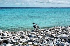 Möve auf dem Strand Stockfoto