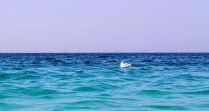 Möve auf dem Wasser im Meer Stockfotografie