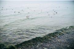 Möve auf den baltischen Meereswellen Stockbild