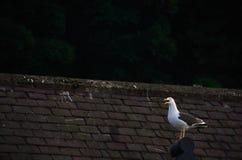 Möve auf einem Dach Stockfotografie