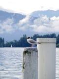 Möve auf weißem Pfosten am See Lizenzfreie Stockfotos