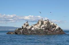 Möve-Insel in der Sonne Lizenzfreie Stockfotografie