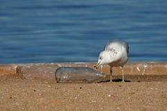 Möve mit Flasche lizenzfreies stockfoto