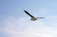 Möve wird zu einem neuen Horizont - Hintergrund des blauen Himmels vorangegangen Stockfoto