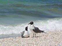 Möven auf dem Strand Stockfoto