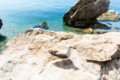 Möven auf den Felsen Lizenzfreies Stockbild