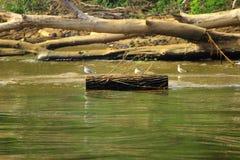 Möven auf einem Klotz nahe dem Ufer Stockbilder