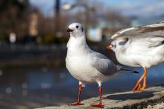 Möven auf Geländer von städtischem Fluss Lizenzfreie Stockfotografie