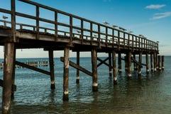 Möven auf Pier stockfotografie