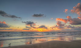 Möven bei Sonnenaufgang Lizenzfreie Stockfotografie