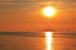 Möven bei Sonnenuntergang Lizenzfreie Stockbilder