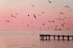 Möven bei Sonnenuntergang Lizenzfreie Stockfotos