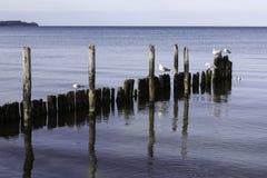 Möven, die auf einem alten gebrochenen Pier in der Ostsee Deutschland stillstehen, stockbild