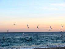 Möven fliegen über das Abendmeer Stockbild