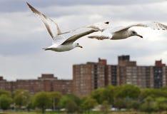 Möven im Flug über Stadt lizenzfreies stockfoto
