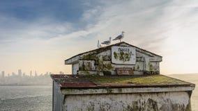 Möven von Alcatraz Stockfotos