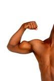 Músculo Fotos de archivo