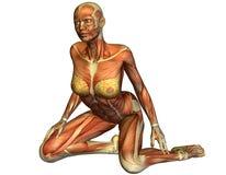 Músculo de uma mulher de ajoelhamento ilustração stock