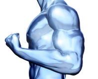 Músculo do metal ilustração do vetor
