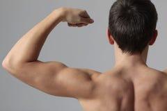 Músculos foto de stock