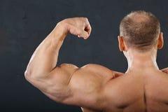 Músculos de la parte posterior, del cuello y de la mano del bodybuilder Fotos de archivo libres de regalías