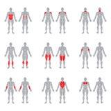 Músculos do corpo humano Fotografia de Stock Royalty Free