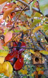 Música del otoño Fotografía de archivo