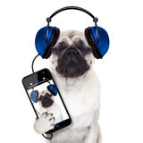 Música do cão fotografia de stock