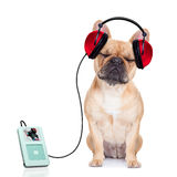 Música do cão foto de stock