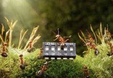 Música en el microchip, cuento de hadas del juego de las hormigas Fotos de archivo
