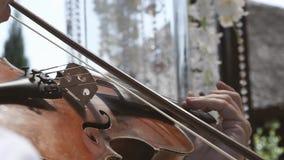 Músico que toca el violín durante la ceremonia que se casa Instrumento musical en las manos del primer almacen de video