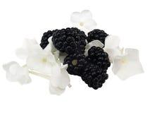 Mûre avec la fleur blanche Photographie stock