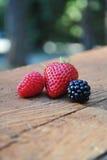 Mûre, framboise et fraise Photo stock