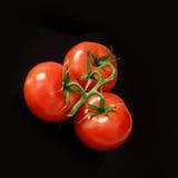 Mûrissez les tomates au-dessus du fond noir photographie stock libre de droits