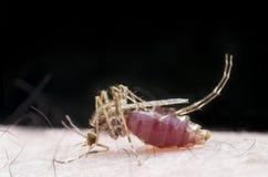 Mückenstich Lizenzfreie Stockbilder