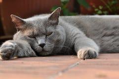 Müde Stockbild