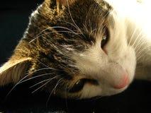 Müde Katze Stockfoto