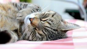 Müde Katze, die auf einem Schwingen schwingt stock video footage