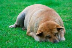 Müde oder deprimiert Stockfotografie