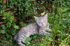 Müdes gestreiftes Katzengegähne Schließen Sie oben von der Katze, die im Gras liegt lizenzfreie stockfotos