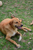 Müdes Hundesitzen lizenzfreie stockbilder
