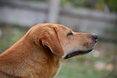 Müdes Hundesitzen lizenzfreie stockfotos