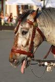 Müdes Pferd Stockfotografie