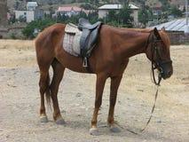 Müdes Pferd Stockfoto