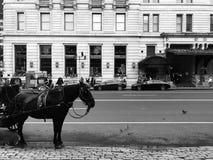 Müdes Pferd mit Wagen Stockfotografie