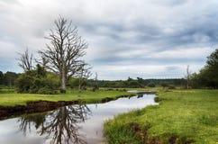 Mühlrasen-Bach im neuen Wald Lizenzfreie Stockfotografie