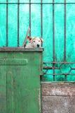 Müllcontainer-Hund Stockbilder